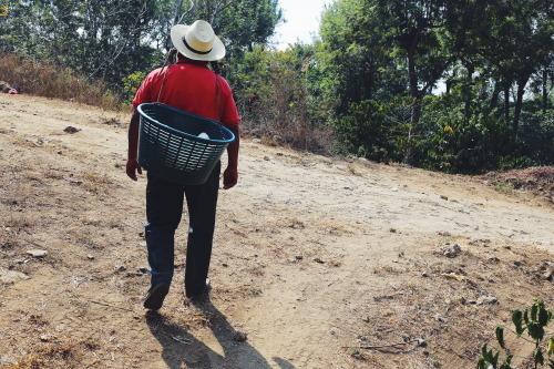 Coffee farmer in Guatemala